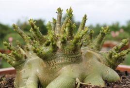 Растения в наличии